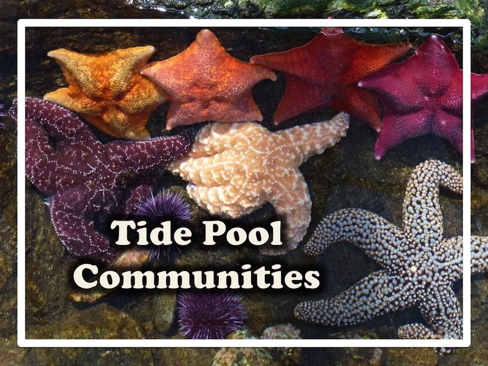 Marine Biology: Tide Pool Communities 1-lesson Class